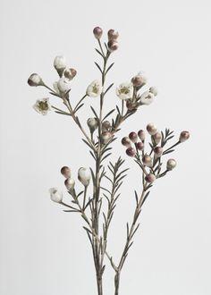 Honeywort, 70x100cmDe mindre motiven i storlek 21x30cm och A3 (29,7x42cm) printas på ett 230 grams matt kvalitetspapper medan de större i storlek 50x70cm och 70