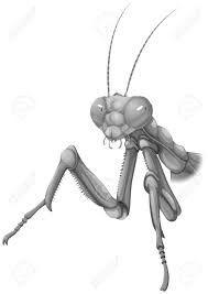 Image result for praying mantis illustration
