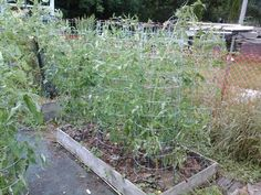 Tomato Tower Cage Cage, Harvest, Tower, Building, Garden, Plants, Rook, Garten, Computer Case