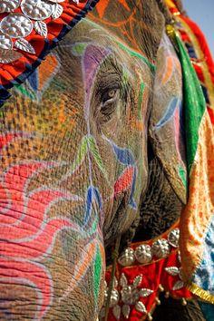 Painted Elephant. Karim Sahai Photography.