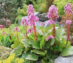 Im Schatten wächst nichts? Nein! Auch an der Nordseite wachsen erstaunlich viele Blühpflanzen, wie diese Beetidee beweist.