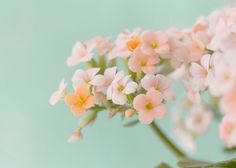 Coral Flower Still Life Photograph Floral Art Print  by JudyStalus, $25.00