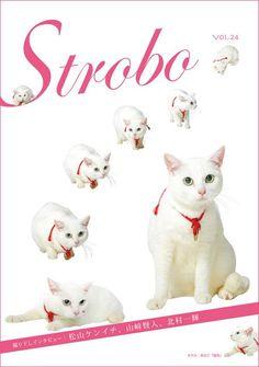 """Twitter / nekozamuraiinfo: 【メディア露出情報】2/25より配布のフリーペーパー「strobo」。創刊以来初の""""タレントの表紙""""を飾ったのは我らが玉之丞さま! #猫侍 #白猫"""