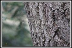 Bark close up Connecticut, 24 x 36, No 1107