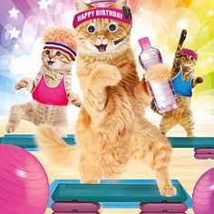 Funny Cats in Gym Keep Fit Birthday Card Work It Ladies Goggly Moving Eyes Happy Birthday Animals, Happy Birthday Funny, Happy Birthday Images, Cat Birthday, Funny Birthday Cards, Birthday Greeting Cards, Birthday Greetings, Birthday Wishes, Cat Gym