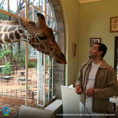 Dr. M. Sanjayan—who led the launch of #NatureIsSpeaking—got a surprise in Africa this morning: a tall breakfast guest. Read more about Sanjayan and his work at CI: http://www.conservation.org/NewsRoom/experts/Pages/ci-expert-details.aspx?ID=168&name=Dr.%20M.-Sanjayan?utm_source=PIN&utm_medium=social