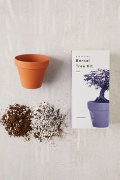 Shop Miniature Indoor Bonsai Maple Tree Grow Kit at Urban Outfitters today. We carry all the latest styles, colours and brands for you to choose from right here.