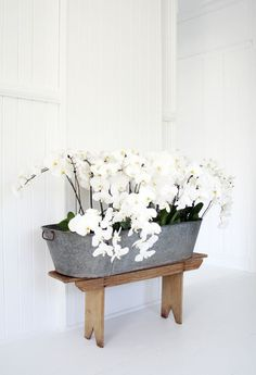 Orchids planted in metal bucket