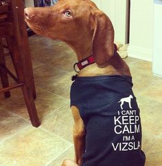 Except like for reals vizslas are crazy!