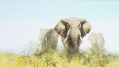 The Three Tuskers by David Shepherd - such a famous painting. Elephant Art, Gentle Giant, Animal Drawings, Painting & Drawing, Elephants, Wildlife, David, Nature, Artwork