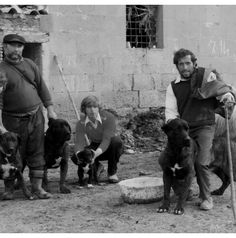 Learn about the history of the Italian Cane Corso. Watch the short video of the leading Cane Corsos in the world. Many of them are found in our dogs pedigrees. Cane Corso Breeders, Cane Corso Mastiff, Cane Corso Puppies, Old Pictures, Old Photos, Italian Cane Corso, Animals And Pets, Boxer, History