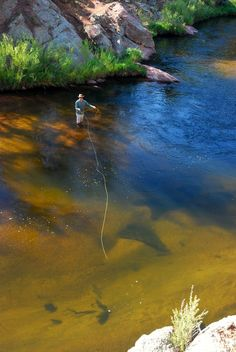 Monster Trout   South Platte River   Colorado..... Not only do I know this place but I can smell it, hear it , feel its wonderfulness on my body, see the pale blueness of the sky, and feel the thin clean air!