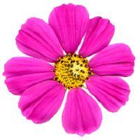 Cheap Flowers, https://www.phpbb.com/community/memberlist.php?mode=viewprofile&u=1525676,Cheap Flowers Delivered,Deliver Flowers,Delivery Flowers,Flowers To Send,Flower Deliveries,Best Online Flowers,Flowers Free Delivery,Free Flower Delivery