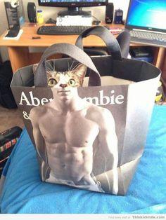 Abercrombie & Meow
