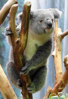 Photo by Paula~Koala on Flickr