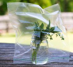 Create a mini greenhouse to propagate root cutttings