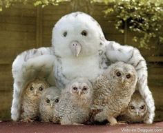 only adorable @Lori Taylor Recker, do you remember, owl, owl?