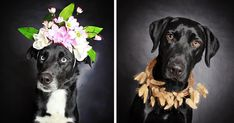 Photographer Helps Often-Overlooked Black Dogs Get Adopted With Beautiful Portraits | Bored Panda