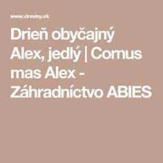 Drieň obyčajný Alex, jedlý | Cornus mas Alex - Záhradníctvo ABIES