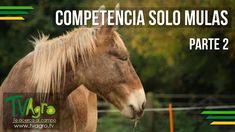 Competencia Solo Mulas - Parte II - TvAgro por Juan Gonzalo Angel