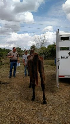 The Martin County Sheriff's Office have made an arrest in a shocking case of animal cruelty, when deputies discovered 11 emaciated horses.