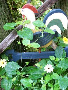 Annual vine climbing the stump trellis. (Garden of Len & Barb Rosen) 6/23/2012