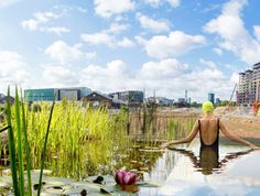 UK's first public pool uses no chlorine just plants to clean at King's Cross by Ooze Architects