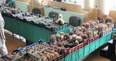 Regionális kaktusz és más pozsgás növények kiállítása és vására 2020 Bogács