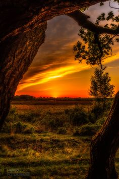 Photograph Sunset tree... by Renso Profijt on 500px