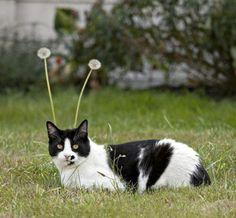 Felino que tem anteninhas biônicas...rs
