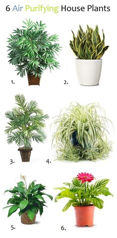 I want the one on the right.... air purifying house plants!