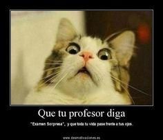 20 Mejores Imágenes De Humor Para Profesores El Humor