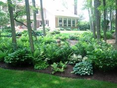 Beautiful shade garden landscaping- ferns and hostas. Ideas for my shady backyard that needs a lot of help.