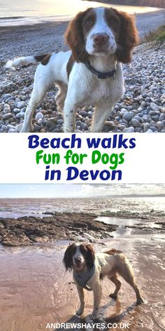Camping with your dog is great fun and we also have dog friendly static holiday homes to hire including a Luxury dog friendly model (please call for details). Off site there are numerous local places that are perfect for dog walks. Uk Tourism, Dogs Day Out, Camping World, Camping Dogs, Devon Beach, Devon Coast, Dog Friendly Holidays, Uk Beaches, Family Days Out