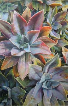 """Colored Pencil drawing by Phillip Zubiate, III - """"Malibu Succulents"""" Pencil Drawings, Art Drawings, Pencil Sketching, Flower Drawings, Drawing Flowers, Realistic Drawings, Polychromos, Cactus, Colored Pencil Techniques"""