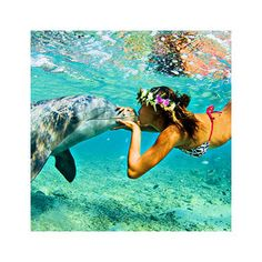 Lovelovelove this picture! Swimming with dolphins is most definitely on my bucket list.