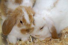 Preview Rabbit Wallpaper