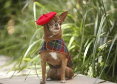 THE MOST FASHIONABLE DOG OF 2015 - New York City's Best-Dressed Dogs of the Year