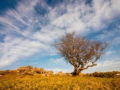 Paul Farrington's 'Tree on Dartmoor' was taken on Dartmoor near Tavistock on 09 March
