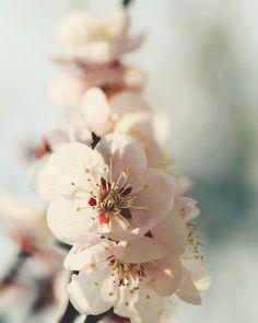 香る春  #梅 #flower #jp_views2nd #team_jp_ #nature #igersjp #instaflower #instaphoto #photooftheday #季節 #風景 #ザ花部 #jp_gallery  #japanfocus #gf_japan #ig_japan #花 #scenery #instapic #picture_to_keep #はなまっぷ #far_eastphotography #as_archive #tokyocameraclub #写真好きな人と繋がりたい #ファインダー越しの私の世界 by lovexbite