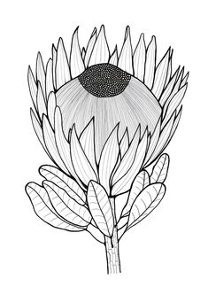 Get yourself in a summer mood when you download and color this FREE adult coloring page of a protea. #FaveCrafter