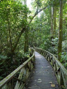 Niah National Park | The limestone ravines