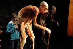 Body Worlds exhibit reveals secret of aging