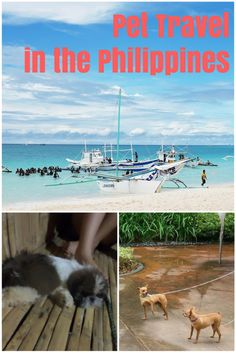 Pet-Friendly Asia: Tips and Ideas for Pet Travel in the Philippines