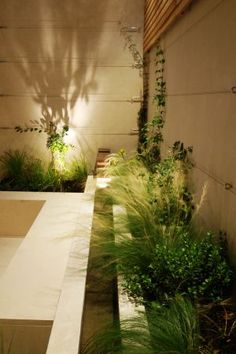 Courtyard-in-chelsea-22-copyright--charlotte-rowe-garden-design-light-iq
