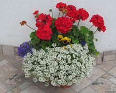 pretty front door flower pots for a good first impression 23 Flower Pots, Container Gardening, Flowers, Garden, Balcony Garden, Porch Decorating, Pelargonium, Herb Garden, Plants