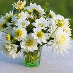 Buy White Garden Dahlia Collection from Sarah Raven: These white and green flowered dahlias are perfect for a white or pastel garden. Table Flower Arrangements, Beautiful Flower Arrangements, Beautiful Flowers, Growing Dahlias, White Dahlias, Deco Floral, Dahlia Flower, Planting Bulbs, White Gardens