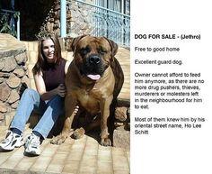 Dog for sale. Real name: Jethro Street Name: Ho Lee Schitt