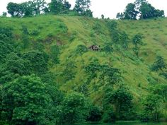 grass | File:Green Grass Hills and Houses.jpg - Wikipedia, the free ...
