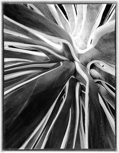 #Seppo #Nurmi's #flower #photo. Abstract, Artwork, Flowers, Plants, Photography, Summary, Work Of Art, Photograph, Photography Business